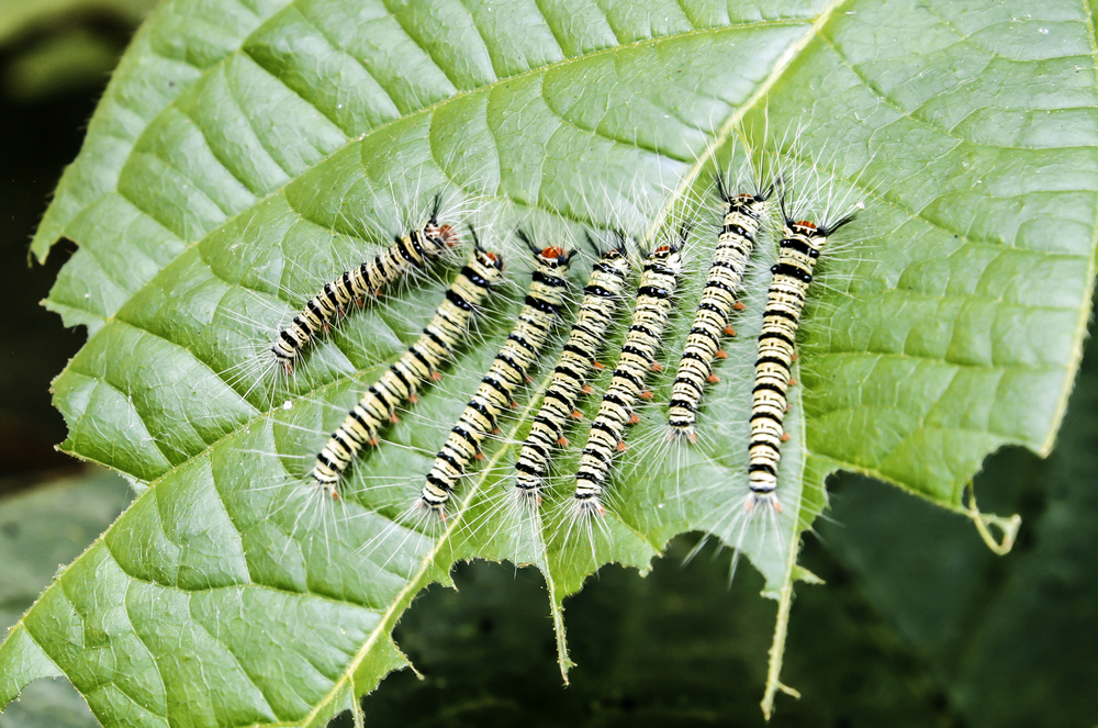 Keeping Harmful Pests Away from Your Garden?